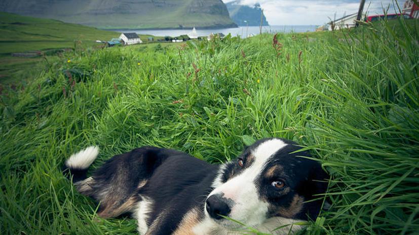Ирландские отшельники колонизировали Фарерские острова задолго до викингов