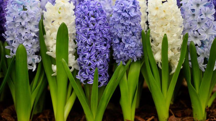 В британских больницах запрещают цветы