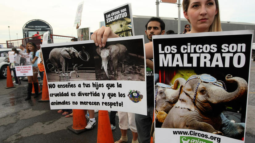 В Мехико запретят цирковые представления с участием животных