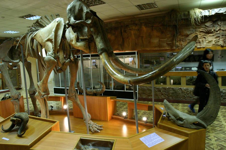 Останки мамонтов обнаружены на дне Волги