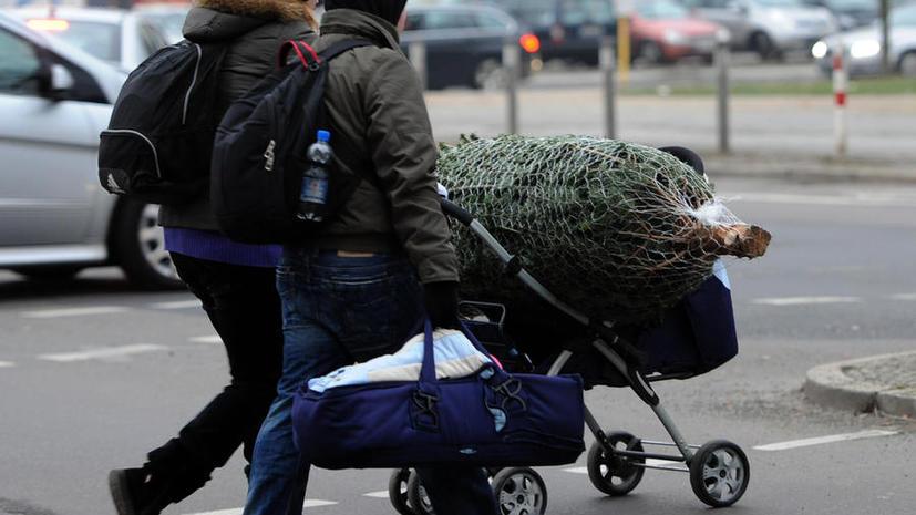 Каждая пятая рождественская ель в Швеции украдена