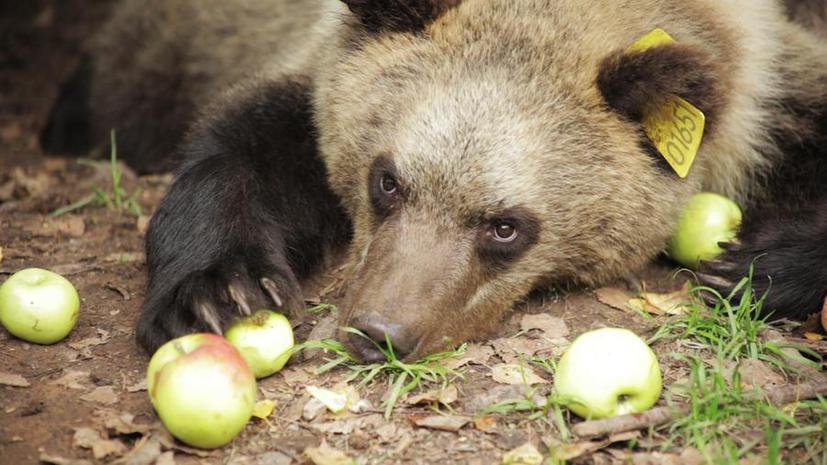 Интернат для медвежат: премьера фильма на RTД