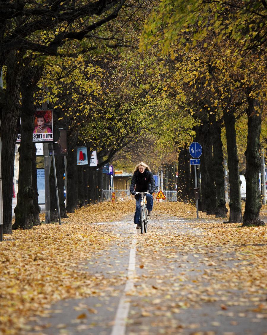 Мэрия Москвы будет учить школьников ездить на велосипедах